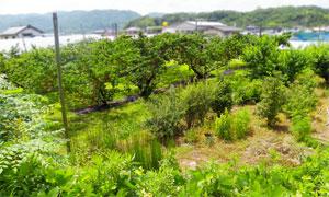 岡山県赤磐市風景