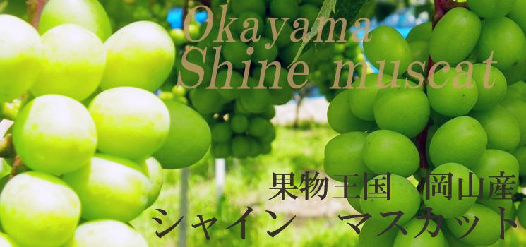 果物王国岡山のシャインマスカット